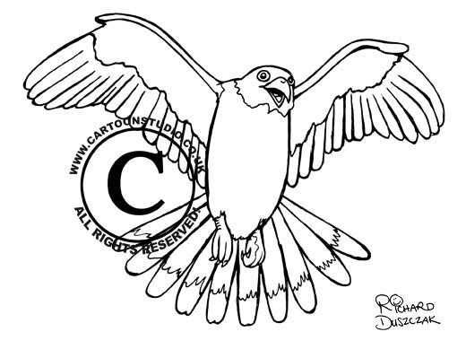 illustration of bird of prey